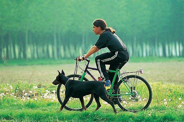Foto de una dama que lleva a su mascota, un perro grande, mientras ella conduce una bicicleta.